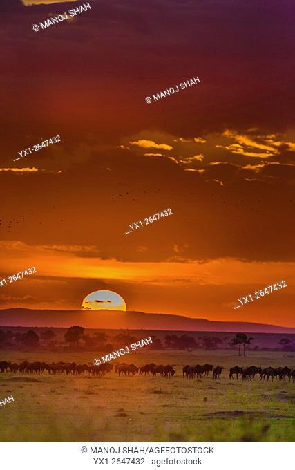 Wildebeest migration at Sunrise