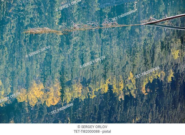 Canada, Alberta, Jasper, Trees reflected in Horseshoe Lake