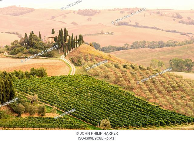 Rolling landscape with vineyard and farmhouse, Tuscany, Italy