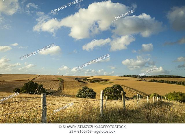 Summer evening in South Downs National Park, West Sussex, England