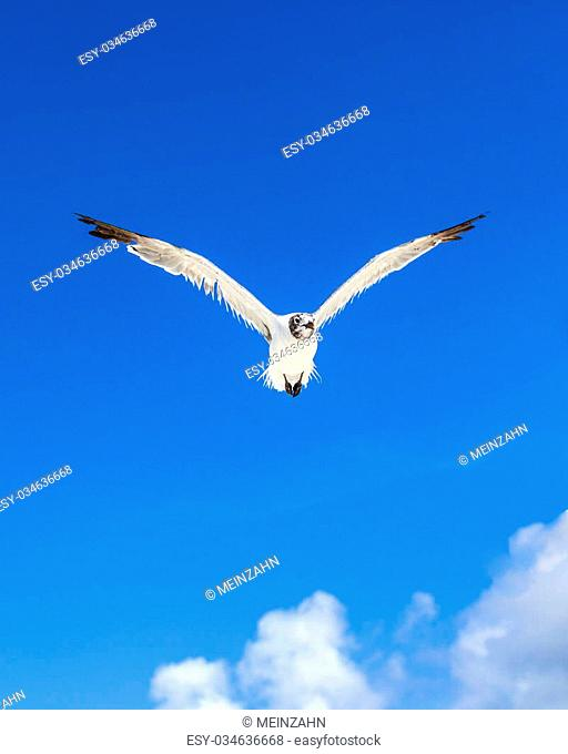 seagull on blue sky background at the ocean