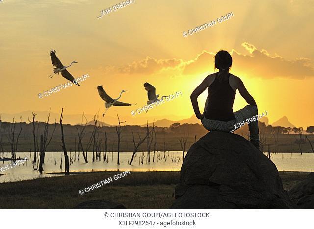 young woman admiring a flight of grey heron at sunset by the Senanayake Samudraya Lake, Gal Oya National Park, Sri Lanka, Indian subcontinent, South Asia