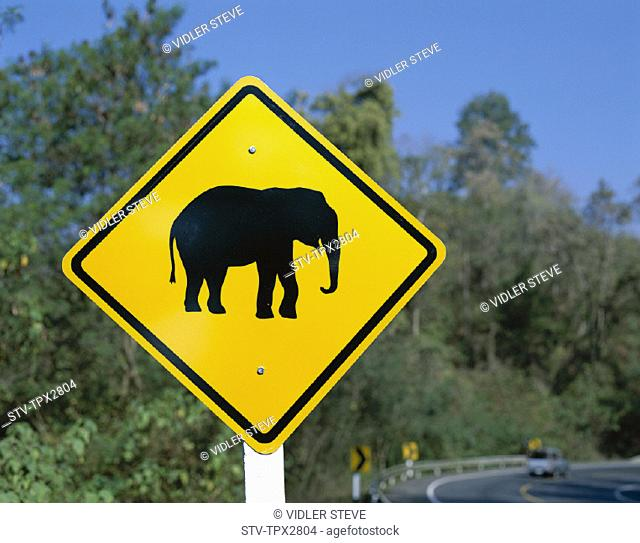 Asia, Chiang mai, Elephant, Golden triangle, Holiday, Landmark, Road, Sign, Thailand, Tourism, Travel, Vacation