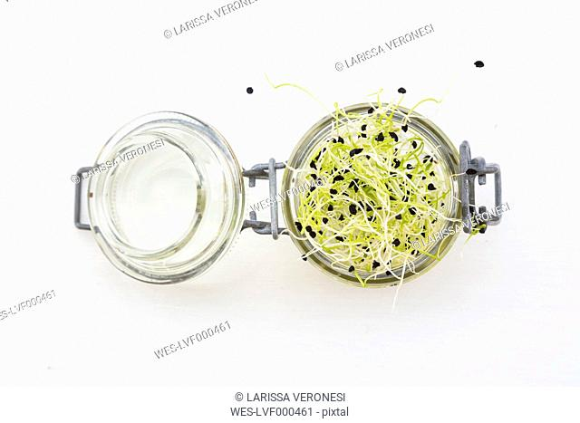 Preserving jar with leek sprouts on white ground
