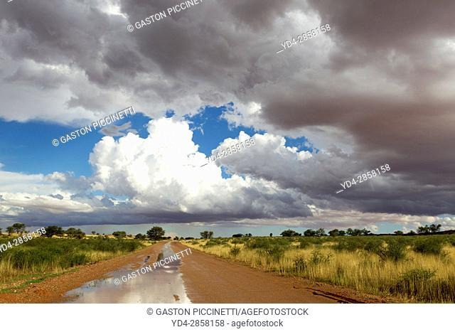 Flooded and flooded roads during the rains give us these spectacular landscapes of the Kalahari, often accompanied by spectacular skies