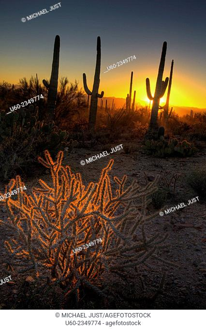 The sun sets amongst the cactus at Saguaro National Park, Arizona