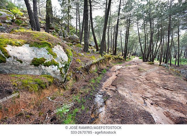 Cigarral road in Cadalso de los Vidrios. Madrid. Spain. Europe