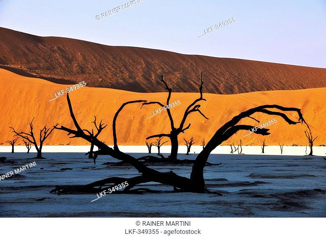Dead tree on clay soil in front of red sand dune, Deadvlei, Sossusvlei, Namib, Namibia, Africa