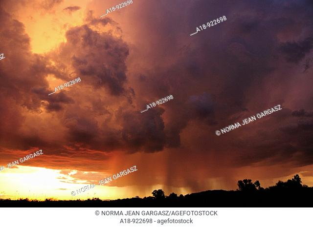 Storm clouds and rain during a monsoon storm in the Sonoran Desert in Tucson, Arizona, USA