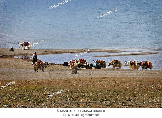 Tibetians waiting for tourists with saddled yaks, Nam-Tsho-Lake, Tibet