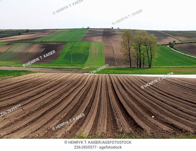Field in Lesser Poland near Slomniki