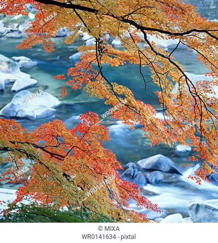Autumn Leaves And Water, Okayama, Japan