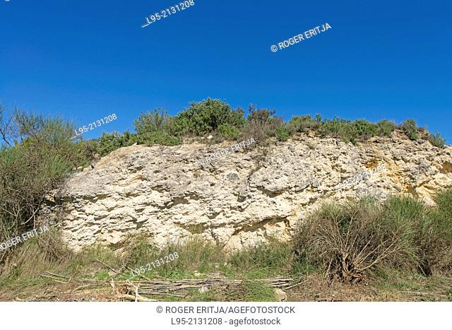 General view of a fossil coral reef, Sant Sadurní d'Anoia, Spain