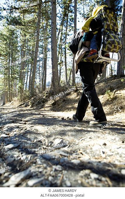 Hiker walking in woods with baby in backpack carrier, low angle view