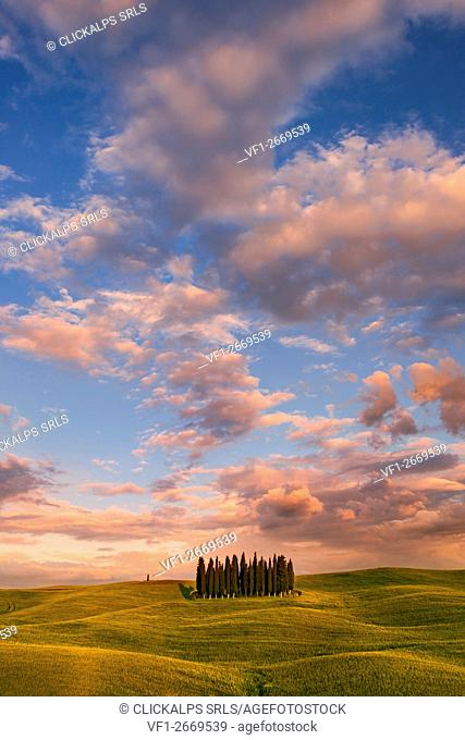 Italy, Tuscany, Siena District, Orcia Valley - cypresses at sunset