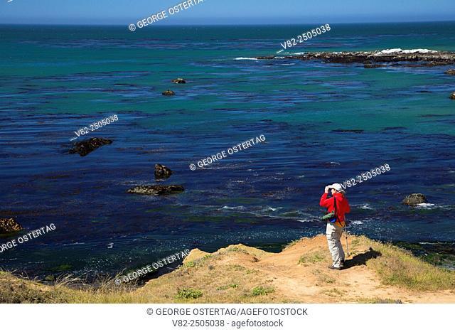 Birding on coastal bluffs, Estero Bluffs State Park, California