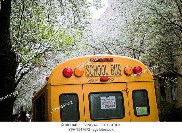 School bus checked for sleeping children parked in the New York neighborhood of Chelsea amongst blooming callery pear trees
