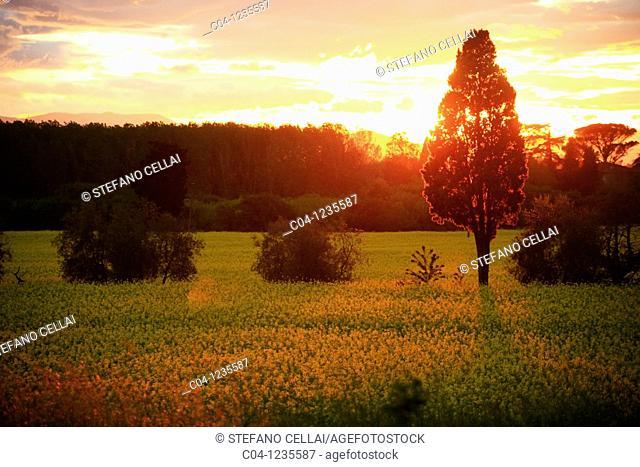 Country near Florence, Tuscany, Italy