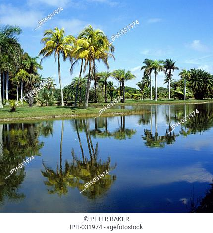 Royal Palm Lake in the Fairchild Tropical Botanic Garden at Miami