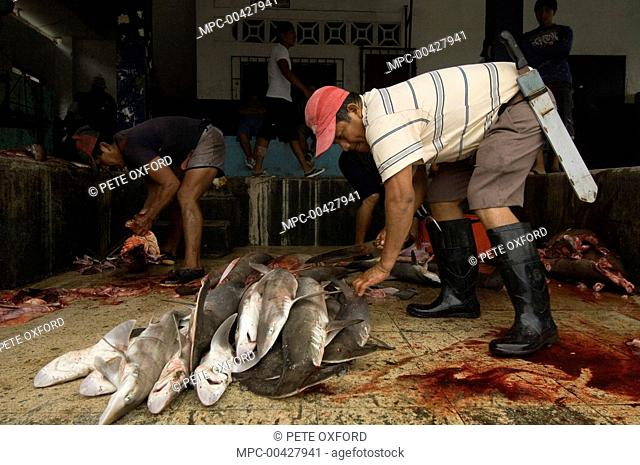 Finning juvenile sharks in the area's largest fish market for artisanal fishermen, Santa Rosa Fishing Village, Santa Elena Peninsula, Ecuador