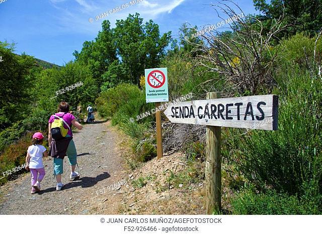 Ayllón Massif. Parque Natural Hayedo de Tejera Negra. Guadalajara province. Castilla-La Mancha. Spain
