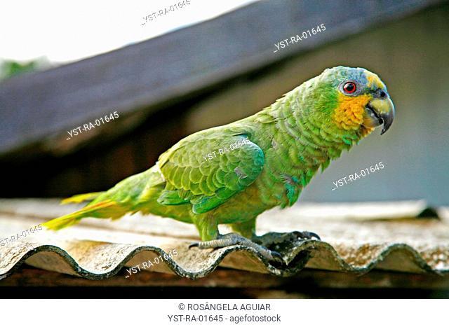 Bird, Belém, Pará, Brazil