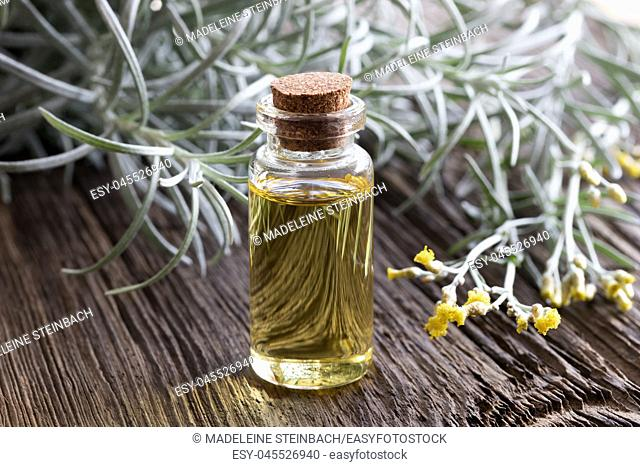 A bottle of helichrysum essential oil with blooming helichrysum italicum on a wooden background