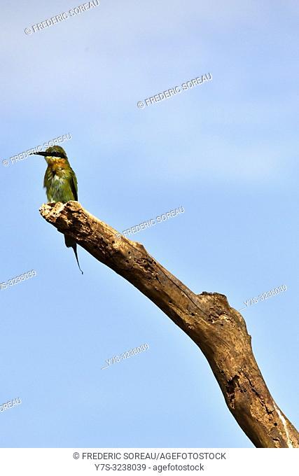 A bird in Prek Toal bird sanctuary,Cambodia,South east Asia