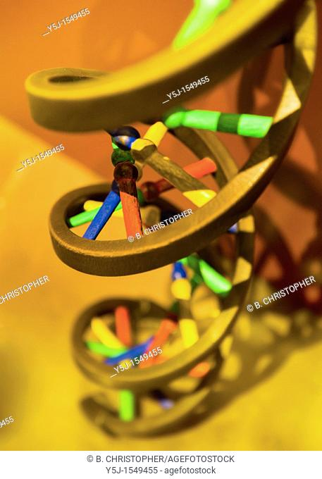 Dna Double Helix Model Stock Photos And Images Age Fotostock