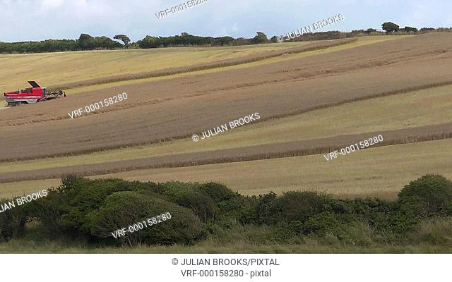 Combine harvester cutting a field of rape on a hill in the distance - TL