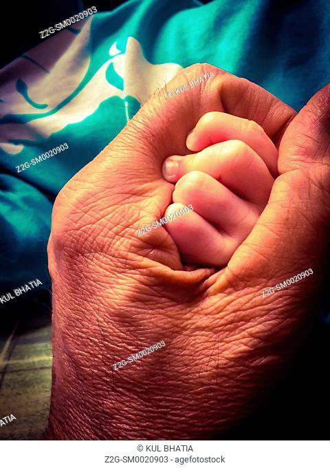 A grandfather's old hand envelops a newborn baby's fist, a tender bond between two generations, Nova Scotia, Canada