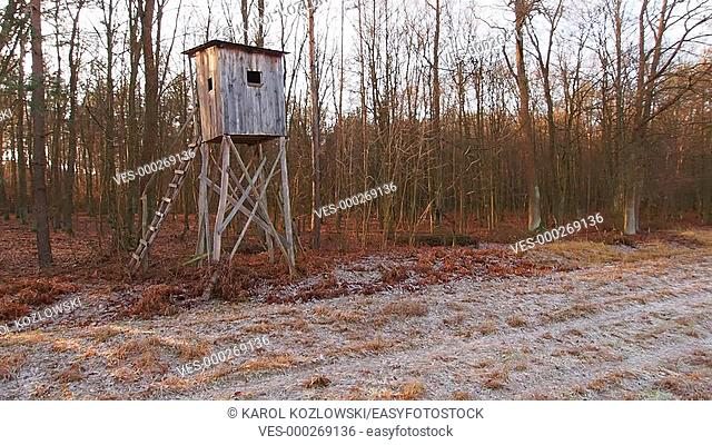 Box Hunting Stand in the forest near Lublin in Poland