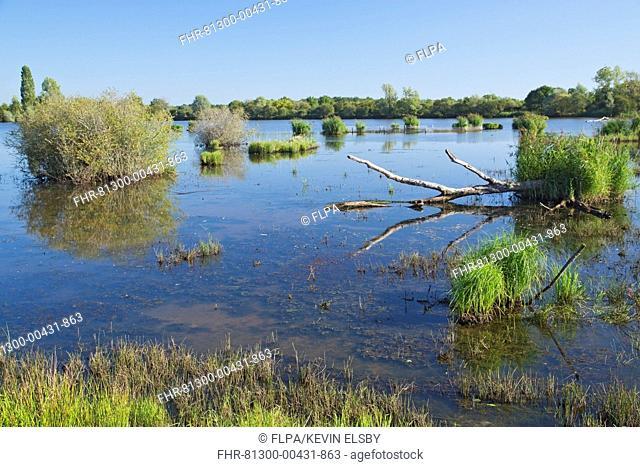 View of freshwater marshland habitat, Parc Naturel Regional de la Brenne, Indre, France, September