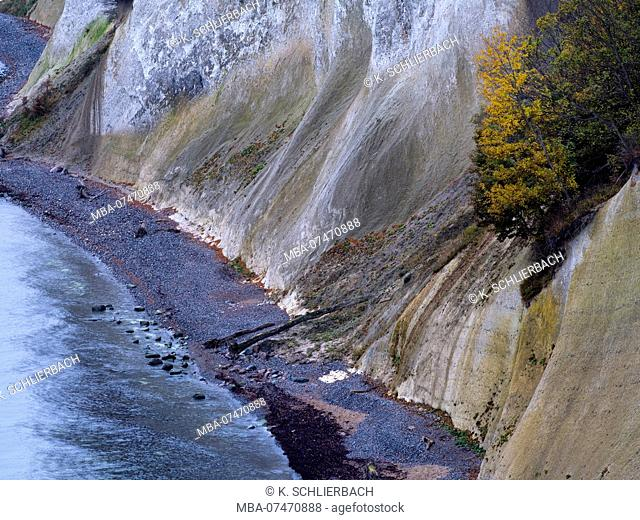 Europe, Germany, Mecklenburg-Western Pomerania, Rügen Island, Jasmund National Park, UNESCO World Natural Heritage European beech forests