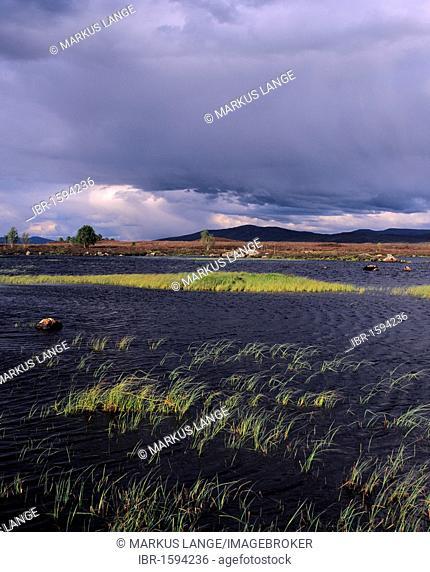 Loch Ba, Rannoch Moor, Highlands, Scotland, United Kingdom, Europe