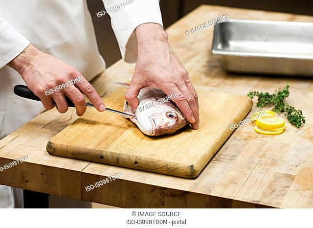 Male chef preparing fish in commercial kitchen