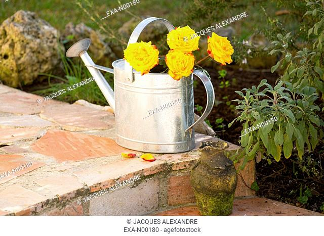 Yellow roses in watering can