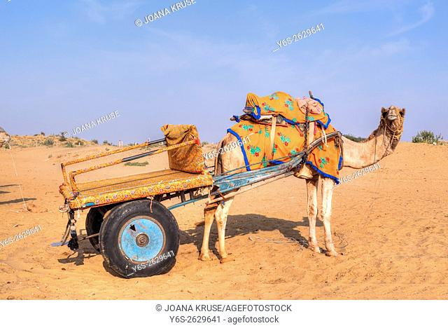 camel carriage in the Thar desert, Rajasthan, India
