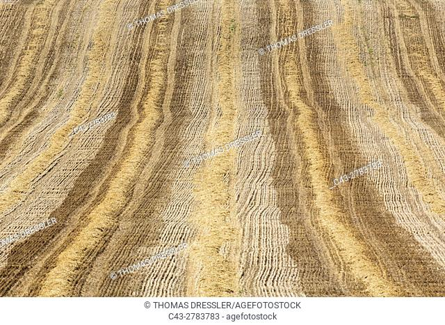 Abstract patterns in a cornfield after the wheat harvest. In the Campiña Cordobesa, the fertile rural area south of the town of Cordoba. In June