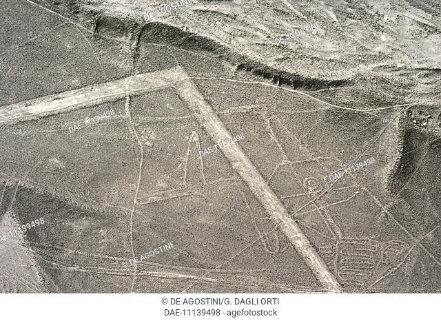 The whale, geoglyph, Nazca Lines (UNESCO World Heritage List, 1994), Nazca, Peru