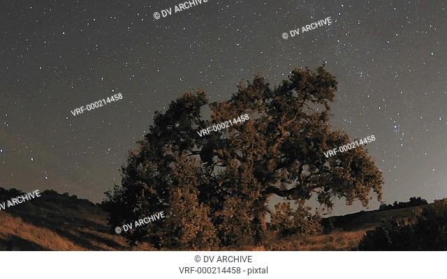Night time lapse motion of star trails and Valley Oak Tree during a new moon in Oak View, California