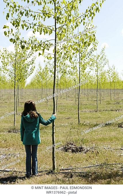 Ten year old girl standing next to commercially grown poplar tree on large tree farm, near Pendleton, Oregon