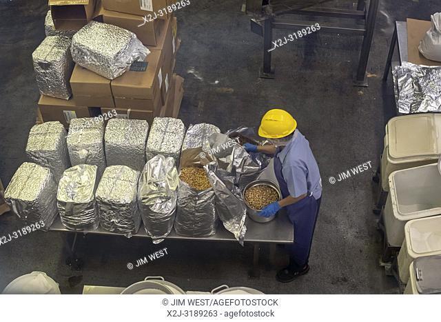 Hilo, Hawaii - A worker processes macadamia nuts at the Mauna Loa Macadamia Nut factory