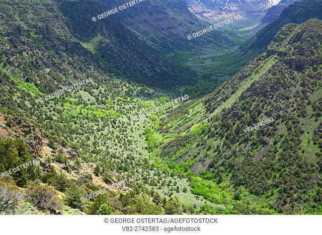 Big Indian Gorge, Steens Mountain Cooperative Management and Protection Area, Steens Mountain Backcountry Byway, Oregon