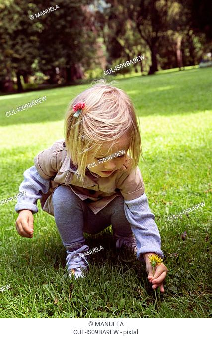 Female toddler crouching to pick dandelion in park