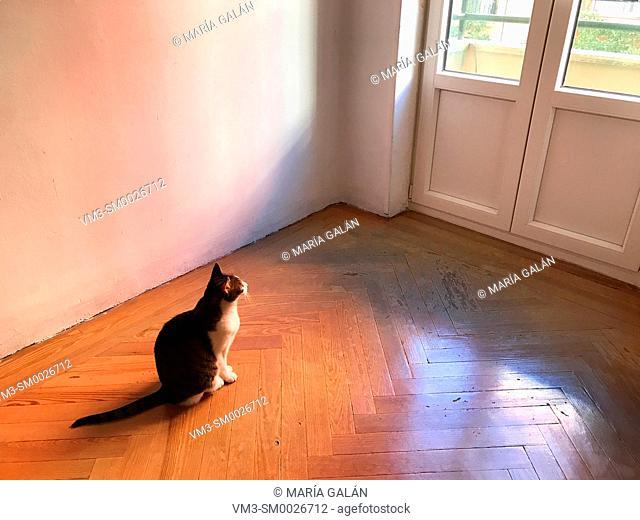 Cat sitting on wooden floor in an empty room, looking at the window