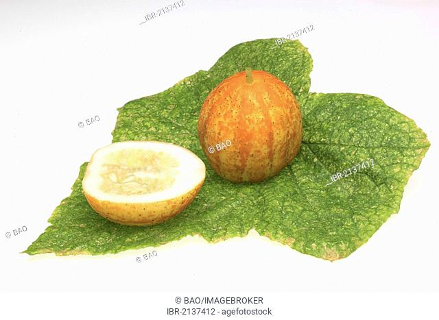 Lemon Cucumber (Cucumis sativus lemon)
