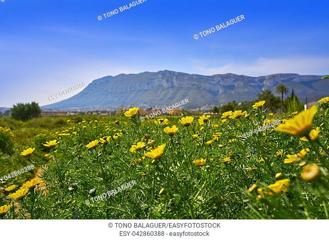 Montgo mountain view in spring with daisy flowers from Denia in spain