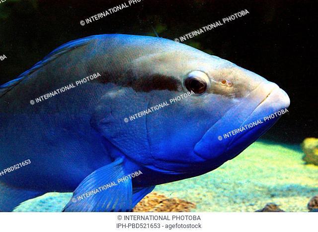 England Dorset Weymouth Weymouth Sealife Centre Specimen fish in Ocean Tunnel display Peter Baker
