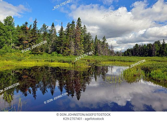 Boreal tre reflections in a beaver pond, Halfway Lake Provincial Park, Ontario, Canada